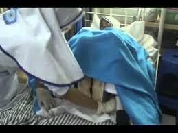 SOP Membersihkan Genetalia Wanita (Vulva Hygiene)