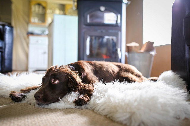 Five Reasons to Take your Dog Glamping