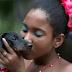 Καρναβάλι στο Ρίο μόνο για σκύλους