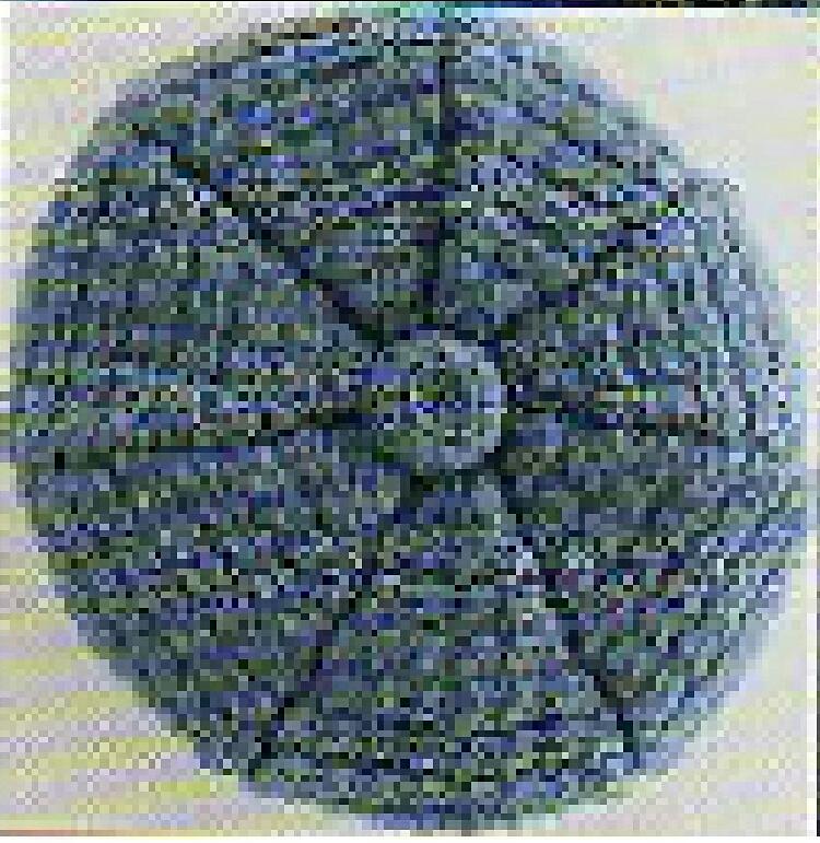 Positively Crochet Newsboy Cap And Medallion Belt Free Crochet