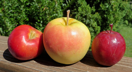 Three apples with peels that are orange-red, yellow with a pink blush, and deep red