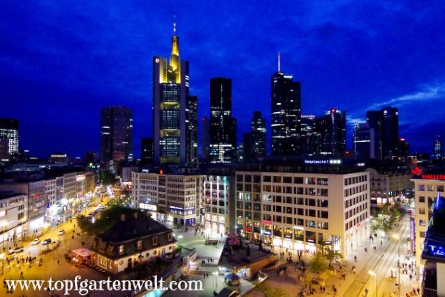 Frankfurter Skyline am Abend mit Hauptwache - Blog Topfgartenwelt