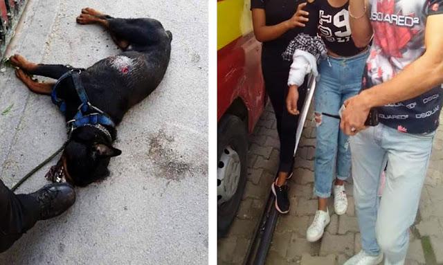 تونس العاصمة :  كاد أن يتسبب في كارثة ... منحرف يروّع ركاب المترو بكلب شرس ويدفعه إلى عضّ فتاة (صور)