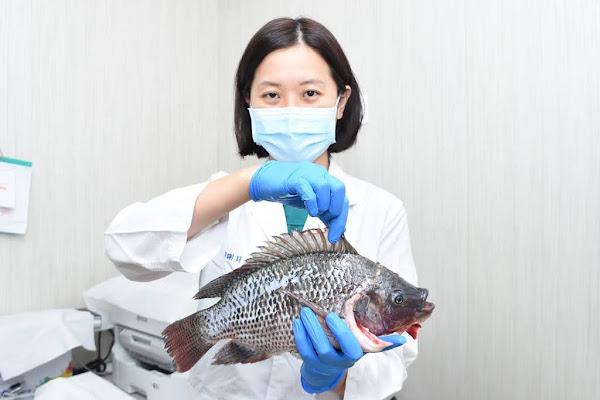 中秋烤肉海鮮處理特別小心 魚蝦扎手恐創傷弧菌上身