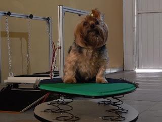 lesão de coluna em cães