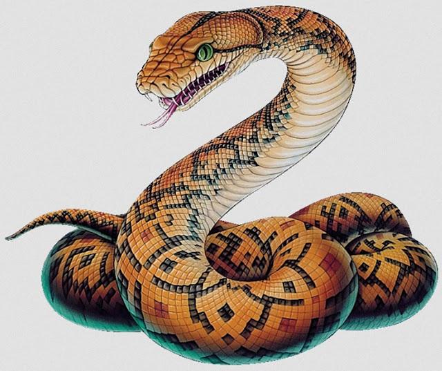 Resultado de imagem para serpente