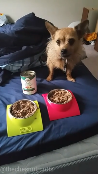 Mini Review: Nutro Limited Ingredient Dog Food