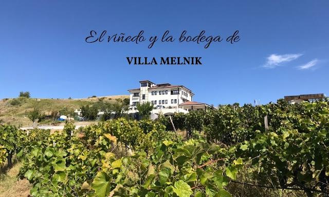 viñedo de Villa Melnik