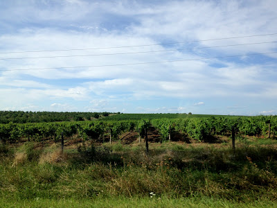 Winogrona w Mołdawii