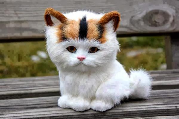 أفضل وألطف 10 قطط في العالم