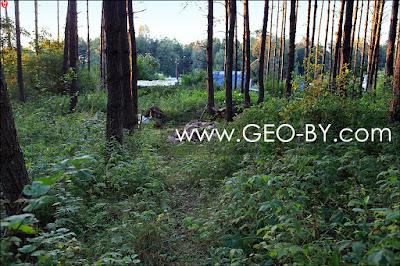 Негорельский учебно-опытный лесхоз. Лесное-Ливье. Порубки леса