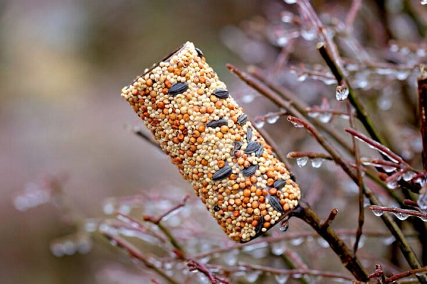 Toilet paper roll bird feeder sitting on a tree branch