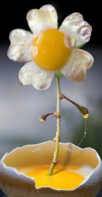 efek manipulasi bunga telur