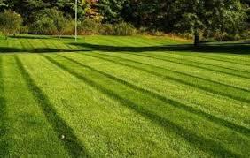 how to fertilize lawn organically,organic lawncare,organic lawn service,organic yard care,sustainable lawn care,organic lawn care tips,natural lawn care,organic lawn maintenance,organic lawn care,organic lawn care schedule,organic lawn,organic lawns,organic lawn treatment