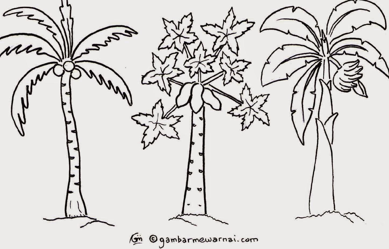 Download Mewarnai Gambar Pohon Singkong
