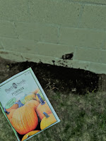 A small mound of dirt with a packet of pumpkin seeds held up in front of it.