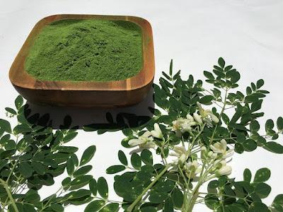 daun kelor, kandungan gizi daun kelor, kandungan nutrisi daun kelor, manfaat daun kelor, manfaat daun kelor untuk kesehatan,