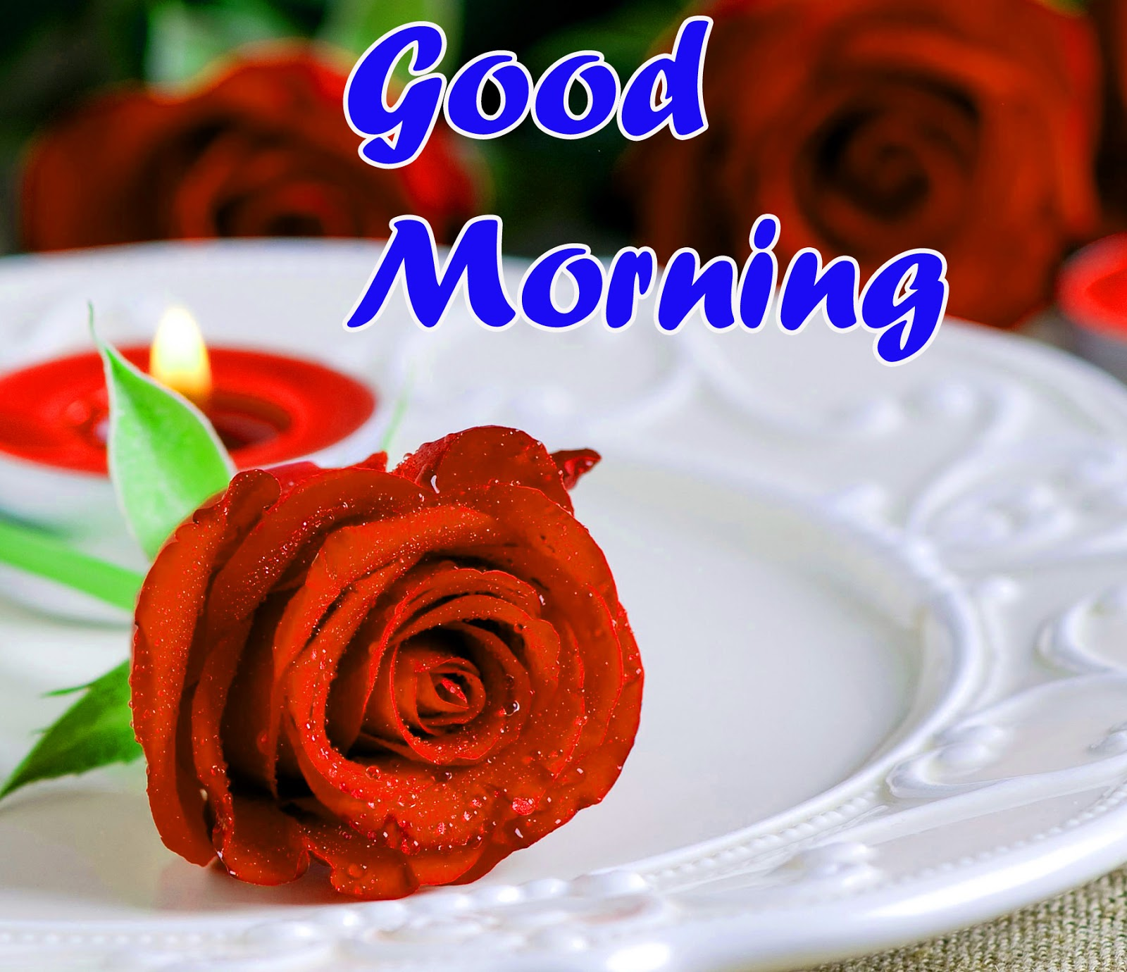 good morning rose for girlfriend