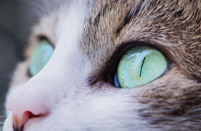 Jak dbać o kocie oczy