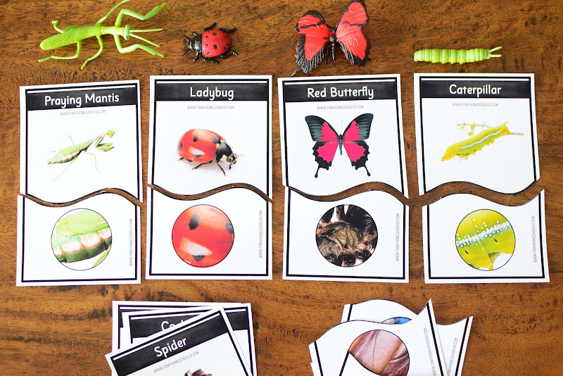 INSECT THEMED VISUAL DISCRIMINATION ACTIVITY