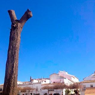 Árbol desmochado en Prado del Rey. Este pueblo  blanco de la Sierra de Cádiz, donde nací, era  conocido como el Jardín de la Sierra. Este año  pasó de ser un jardín a un lugar que ha recibido  a la primavera cortando y desmochando  a cientos de árboles.