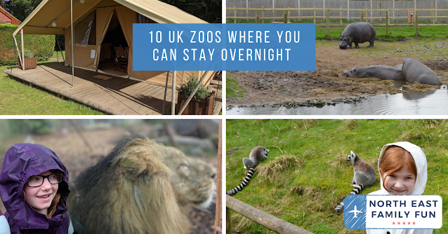 10 UK Zoos Where You Can Stay Overnight