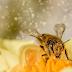 Απεγνωσμένοι από την ξηρασία, αγρότες νοικιάζουν μέλισσες για την επικονίαση των καλλιεργειών