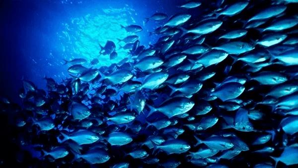 Chiết suất tế bào gốc cá hồi