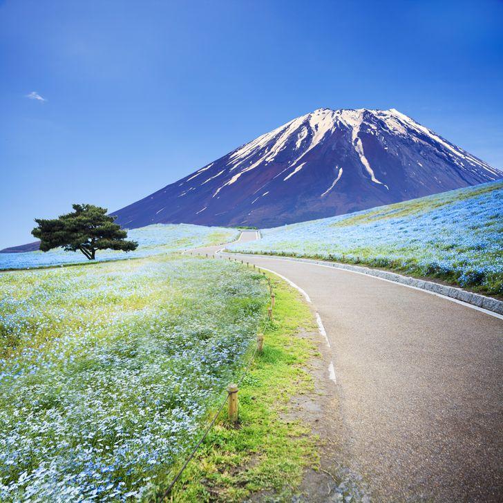 japan-putovanja-travel-cvijeće-park