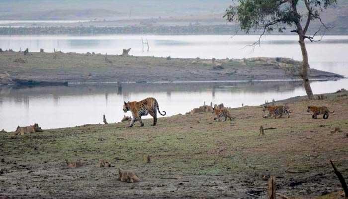 the wildlife india, wildlife, wildlife news,