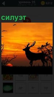 В свете красивого заката показан силуэт большого оленя с высоким и ветвистыми рогами