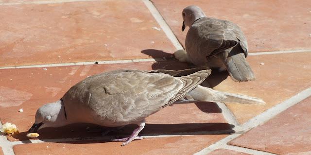 sistemas antipalomas control aves valladolid massim