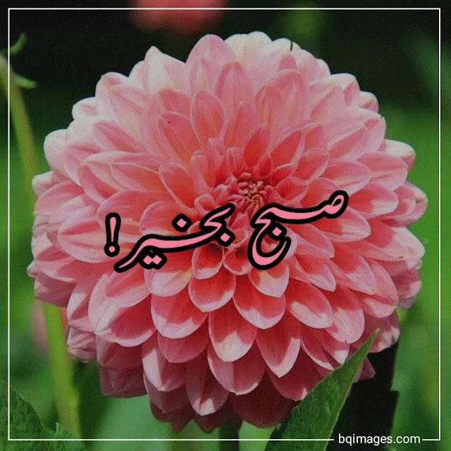 subah bakhair in urdu