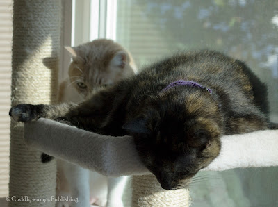 The Reat Cats on cat tree_4
