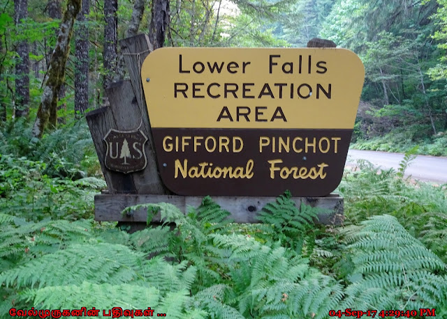 Gifford Pinchot National Forest Lower Falls