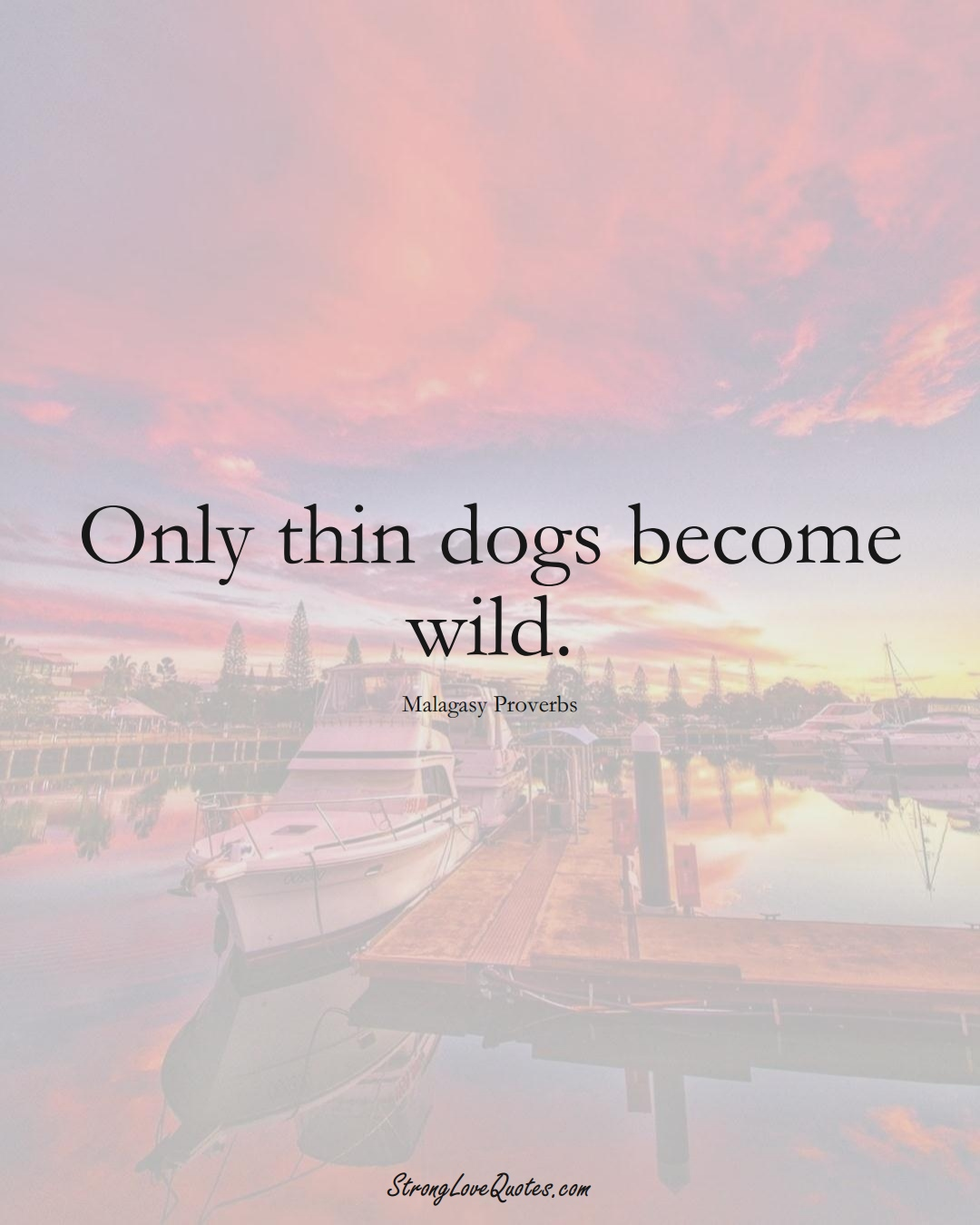 Only thin dogs become wild. (Malagasy Sayings);  #AfricanSayings