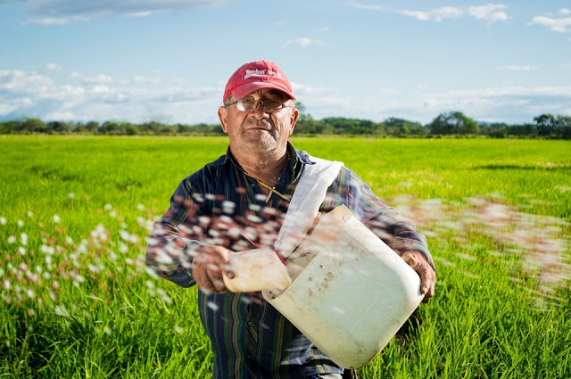 4 Proven Tips To Increase Rice Yield