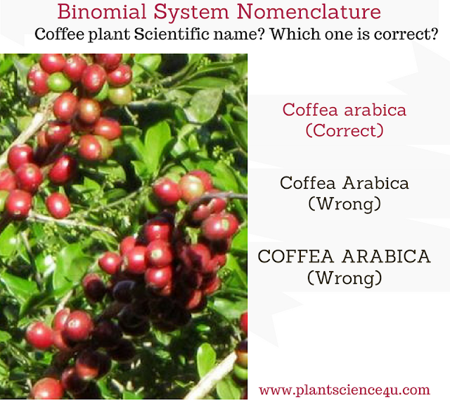 Binomial System of Nomenclature