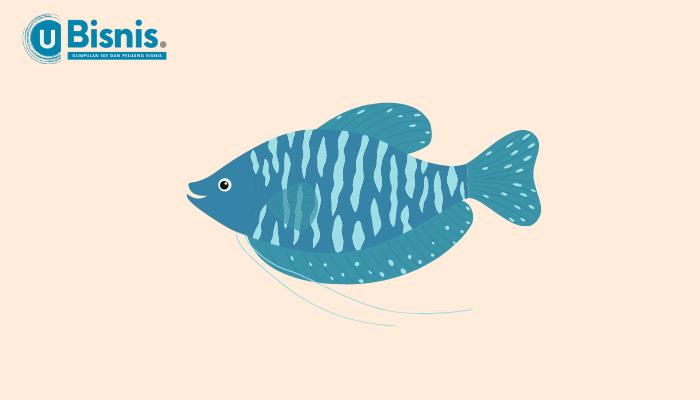 Ikan Hias Air Tawar Langka Paling Laris