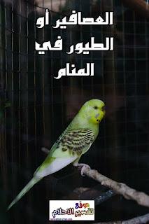 تفسير حلم العصافير في المنام
