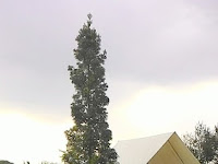Nama - Nama Bagian Pohon Dalam Bahasa Indonesia dan Bahasa Inggris