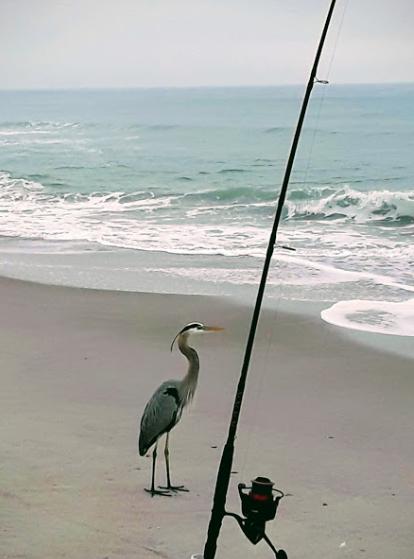 Fish Reports, Florida, Florida Fishing, Fishing, Surf Fishing, Fishing Reports, East Coast, Florida East Coast, Florida East Coast Surf Fishing,