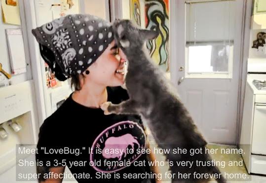 Love bug feline