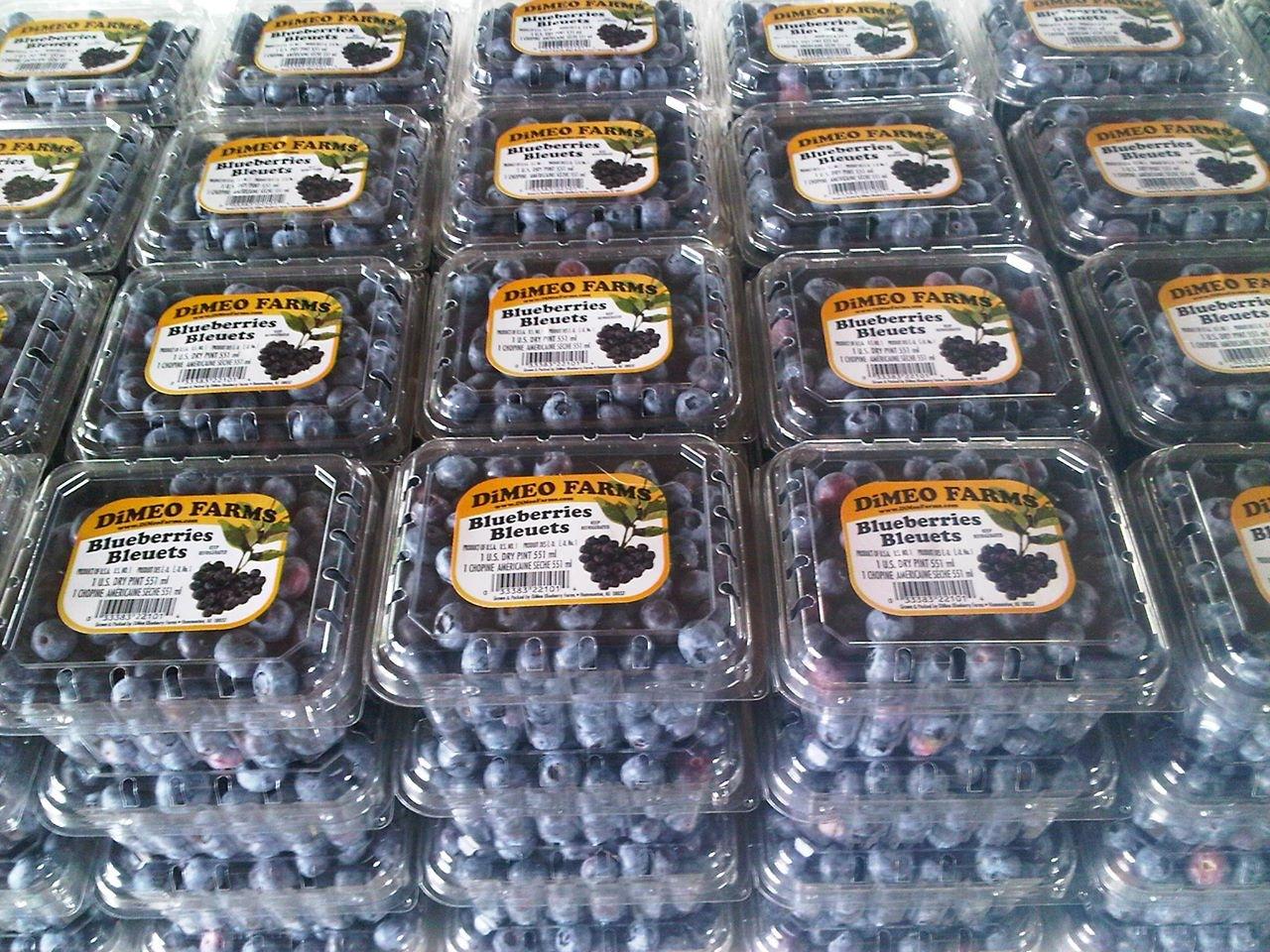 Buy Blueberry Plants Dimeo Farms Blueberry Plants