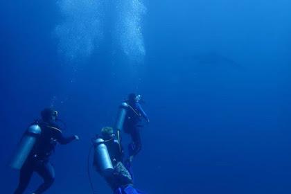 Cerita Menyelam Melihat Manta Ray Di Nusa Penida, Manta Point