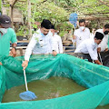 AKJ SYAH Hadiri Panen Ikan Lele di Desa Bara