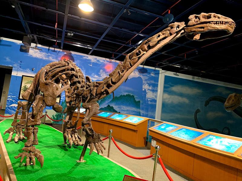 光隆博物館-恐龍化石