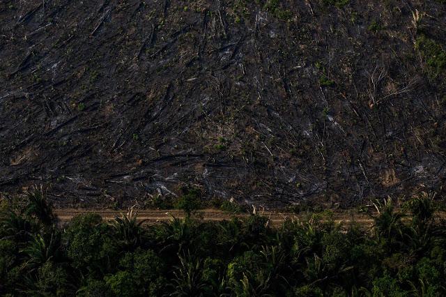 Área desmatada e queimada. Fogo usado em pastagens para renovar o capim para o gado. Foto: Flavio Forner/Ambiental Media