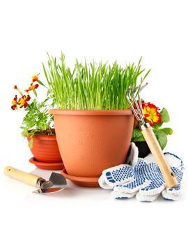 Giardinaggio quali gli attrezzi da utilizzare piante in for Piante secche ornamentali