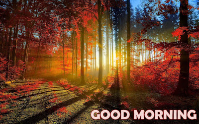 good morning nature images with message